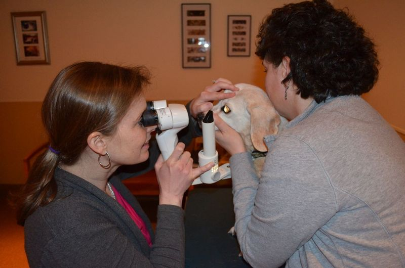 Aurora eye exam 1