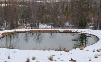 Goose on pond March 28
