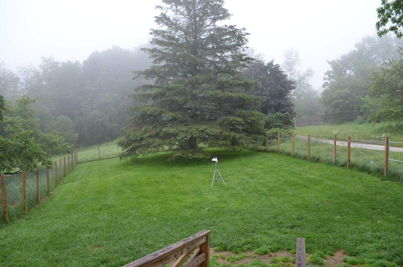 Fog front yard June 26