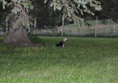 Widget under tree