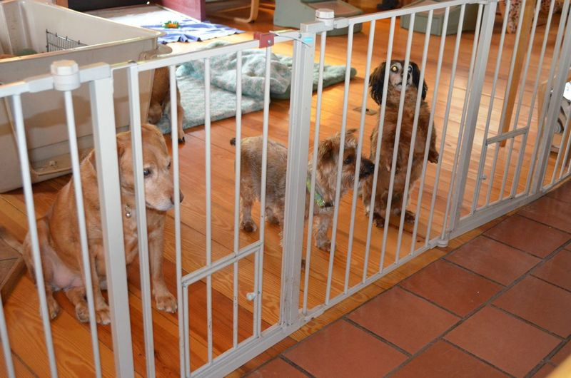 Sophie and friends at gate