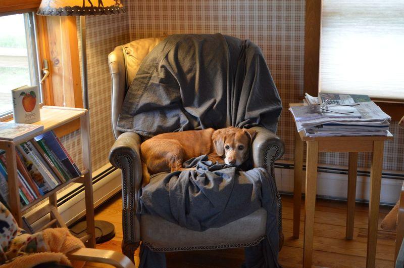 Darla in chair