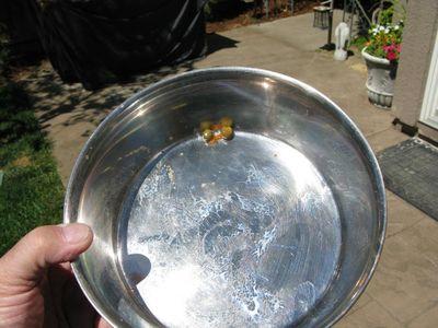 Gabe food bowl 2