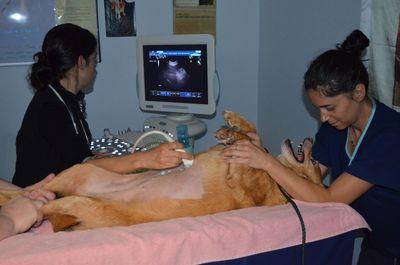 Darla ultrasound