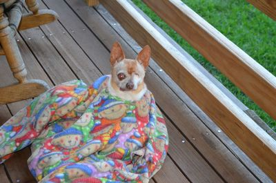 Wilbur in blanket 1