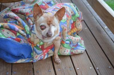 Wilbur in blanket 2