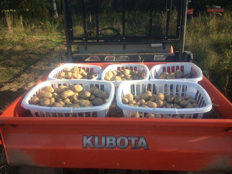 Potatoes in RTV