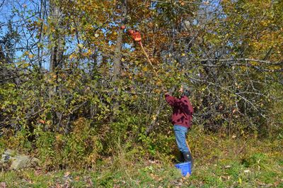 Alayne picking apples Oct 12