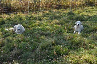 Gina and Joshua in pasture