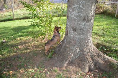 Bugsy at tree