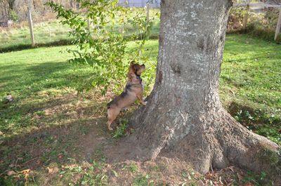 Bugsy at tree