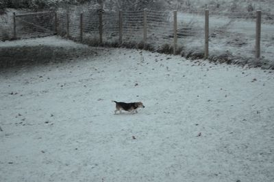 Widget in snow
