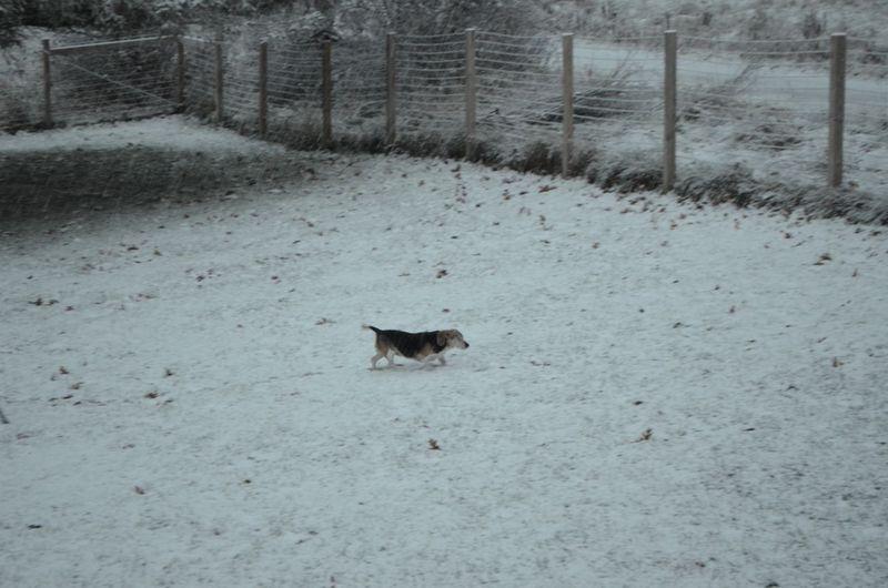 Widget in snow