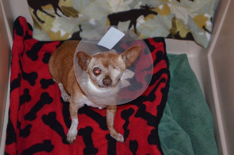 Wilbur after bladder surgery