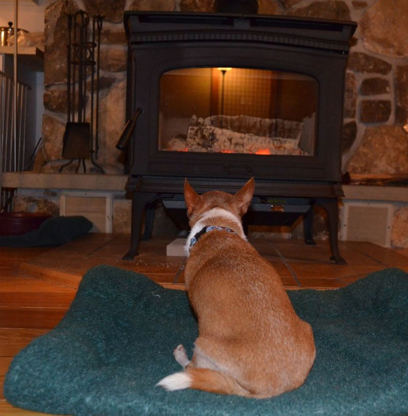 Wilbur in front of fire