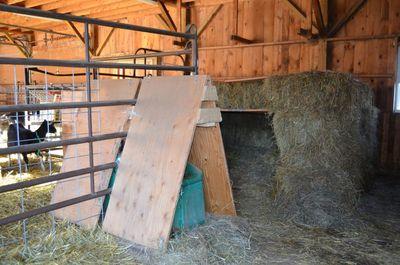 Maremma pen in goat barn