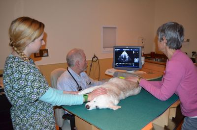 Aurora echocardiogram