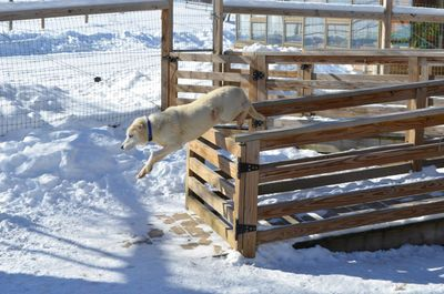 Travis jumping gate