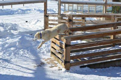 Travis jumping gate