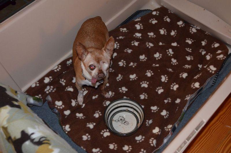 Wilbur with his bowl