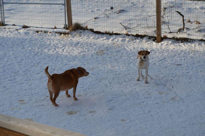 Darla guarding Tanner